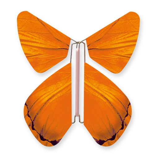 Papillon Impulsion Orange