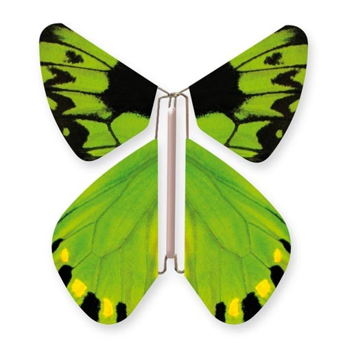 Wild Nature Butterfly Birdwing