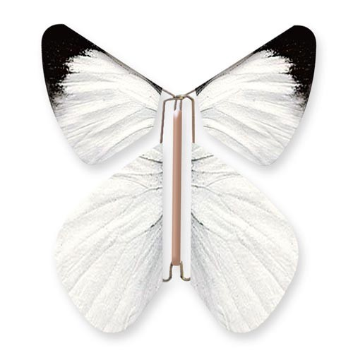 Wild Nature Butterfly White Pieride