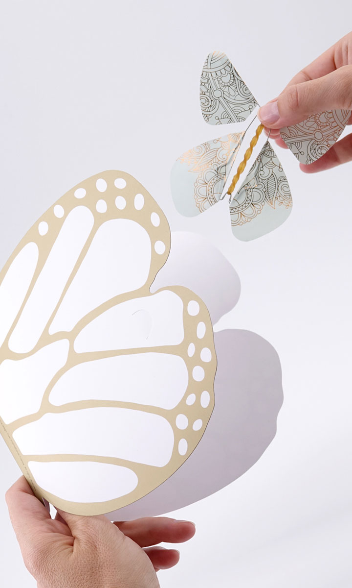 Le Papillon Magique Magicflyer La Carte Papillon